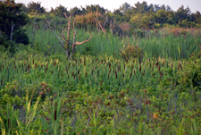 The inter-dune wetland