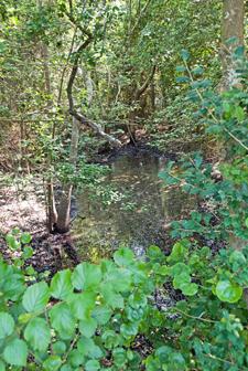 Th vernal pond