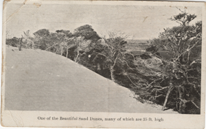 An old clipping of the Avalon dunes