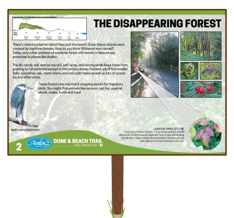 The-Disappearing-Forest-Sign