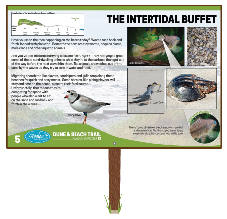The-Intertidal-Buffet-Sign